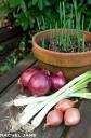 A Few Good Onions